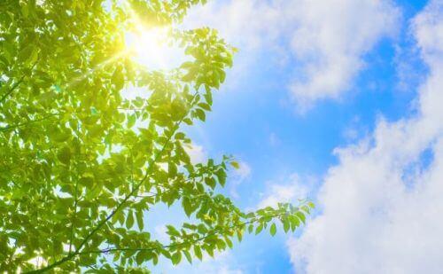 朝に太陽の光を浴びる